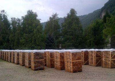 legna-faggio